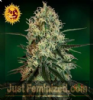 Barneys Farm Chronic Thunder Feminized 5 Seeds